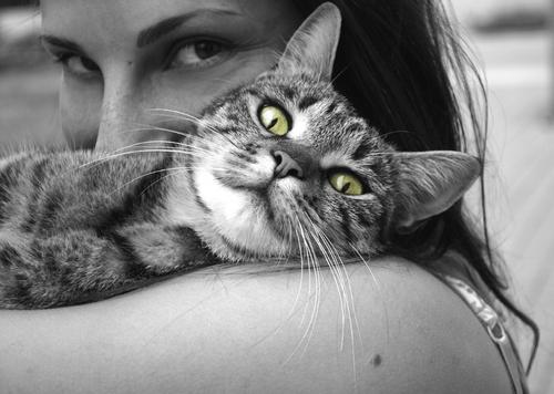 Alerte job de rêve : devenez câlineur de chats