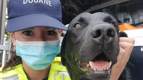 """Un chien des Douanes de Nantes reçoit le titre de """"Chien Héros 2021"""""""
