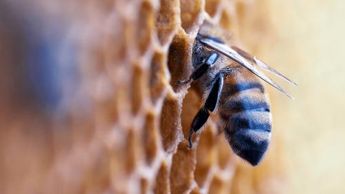 La récolte de miel réduite de plus de moitié en 2021