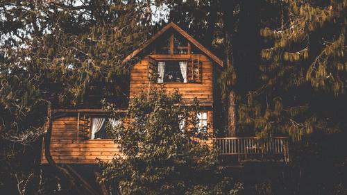 États-Unis : à 9 ans, il construit une cabane dans les arbres et la...