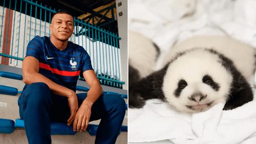 Kylian Mbappé sera le parrain d'un des bébés pandas du zoo de Beauval