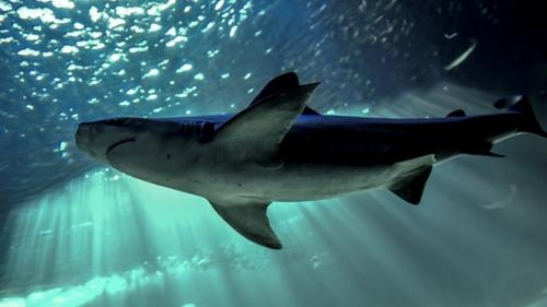Un homme mordu par un requin, il le retient jusqu'à l'arrivée des...