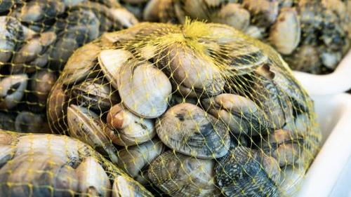 [ SOCIETE ]: Attention si vous avez pêché des palourdes dans la...