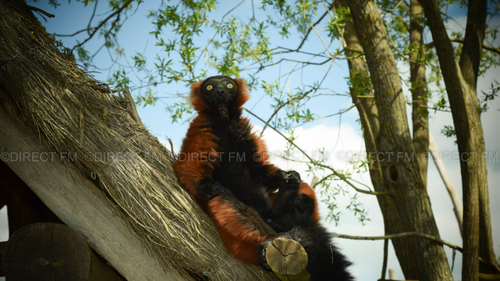 Télévision : le parc animalier de Sainte Croix ce dimanche sur C8