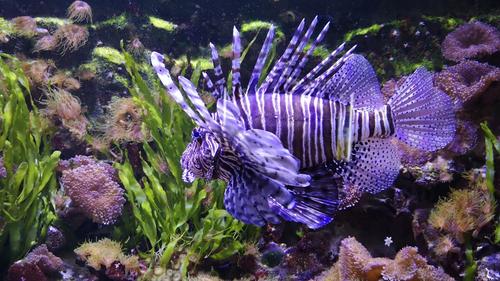 Lorraine : Offre d'emploi pour l'Aquarium D'Amnéville