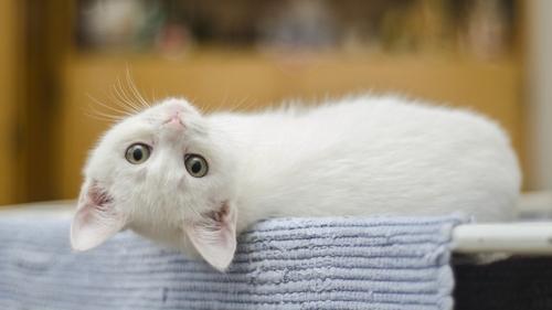 Labège : une journée pour adopter un chat et soutenir une bonne cause