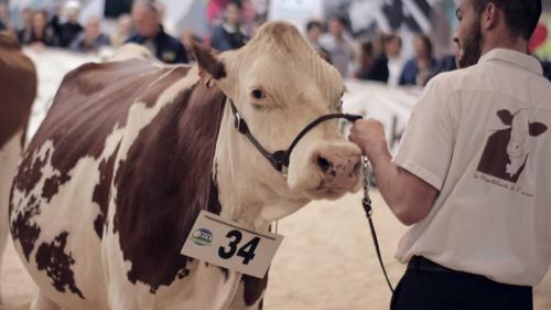 Pontivy: 12e édition du salon Oh la vache ce week-end!