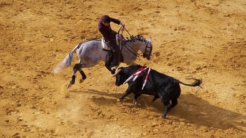 Portugal : la corrida interdite au moins de 16 ans