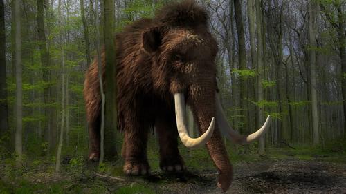 Une entreprise américaine veut faire renaître les mammouths laineux