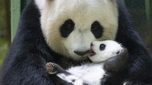 VIDÉO. Zoo de Beauval: 2ème mois d'anniversaire pour Petite neige...
