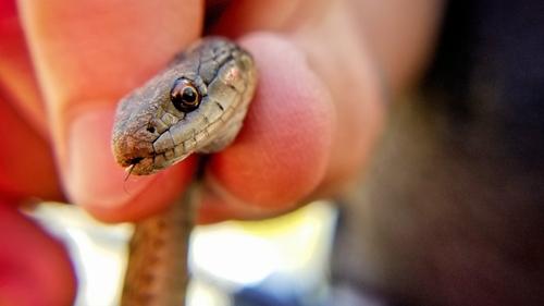 Une femme se retrouve nez à nez avec un serpent dans sa douche (Photo)