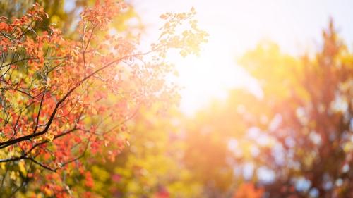 Aviré : la 35ème Fête de l'automne aura lieu le 10 Octobre