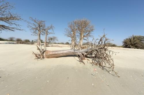 Climat en Afrique: menace pour la survie de millions de personnes,...