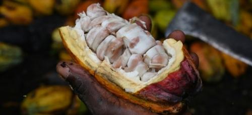 Côte d'Ivoire: 380 millions d'euros pour le  cacao et les grandes...