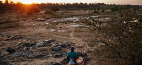 Dans les campagnes sud-africaines, ce très lointain coronavirus...