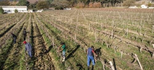 La gueule de bois des vignerons sud-africains en pleine pandémie