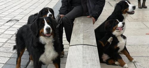 Metz et Nancy dans le Top 20 des villes où il fait bon avoir un chien