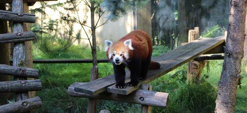 Le zoo d'Amnéville vous attend avec impatience !