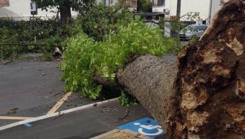 Vent violent en lorraine: un arbre tombe en plein milieu de la route
