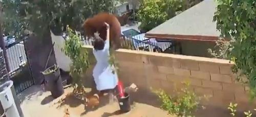 Une adolescente repousse des ours à mains nues pour protéger ses...