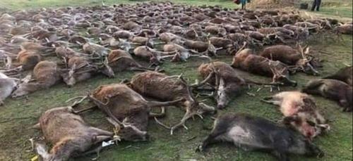 540 animaux abattus : une partie de chasse suscite l'indignation au...