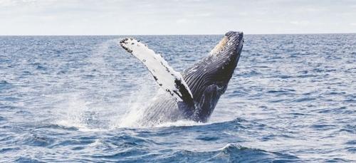 Mexique : de plus en plus de baleines grises s'échouent sur les côtes