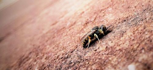 Colombie : un pesticide suspendu après la mort de millions...