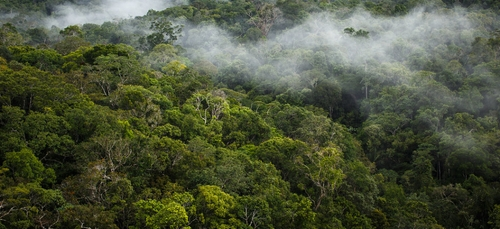La forêt amazonienne rejette plus de carbone qu'elle n'en absorbe