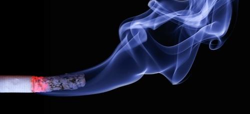 Mois sans tabac : Pour arrêter de fumer, occupez-vous d'un chaton !...