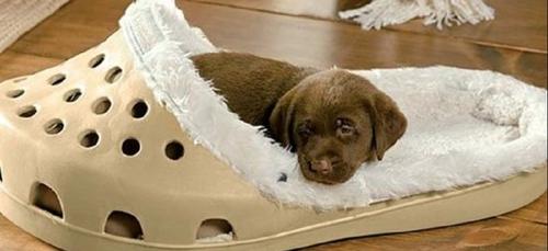 Découvrez les chaussons géants pour vos chiens et chats !