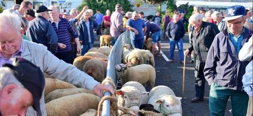 la foire aux moutons de Saint-Sever maintenue ce lundi !
