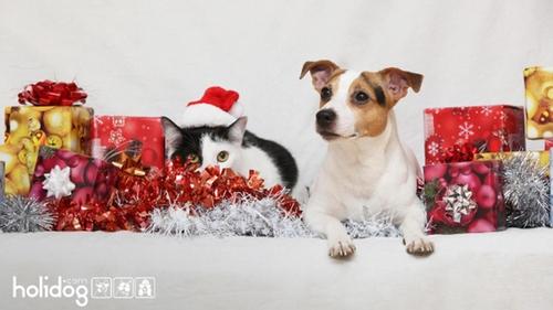 Quels cadeaux pour nos animaux ?