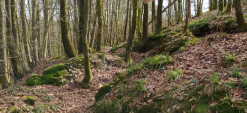 """Les Ardennes : """"partir loin, tout près"""""""