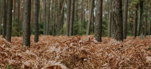 La chasse en battue au grand gibier prolongée dans les Ardennes