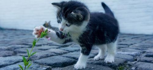 Disparition mystérieuse de plusieurs chats près de Toulouse : les...