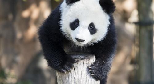 Gagnez vos 4 entrées pour le ZooParc de Beauval !