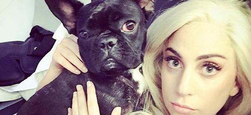 Lady Gaga : cinq personnes arrêtées pour l'enlèvement de ses chiens...