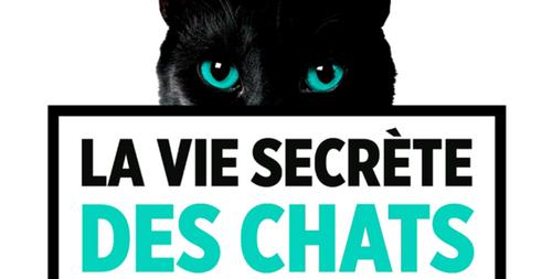 « La vie secrète des chats » : TF1 recherche ses futures stars en...