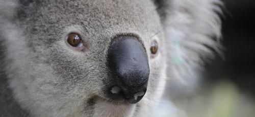 La planète au secours de l'Australie en flammes
