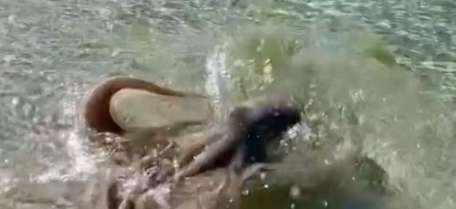 Alors qu'il filme une pieuvre sur la plage, l'animal l'attaque...