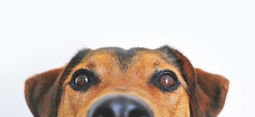 Nouveau job de rêve et vision des animaux : voici le journal des...